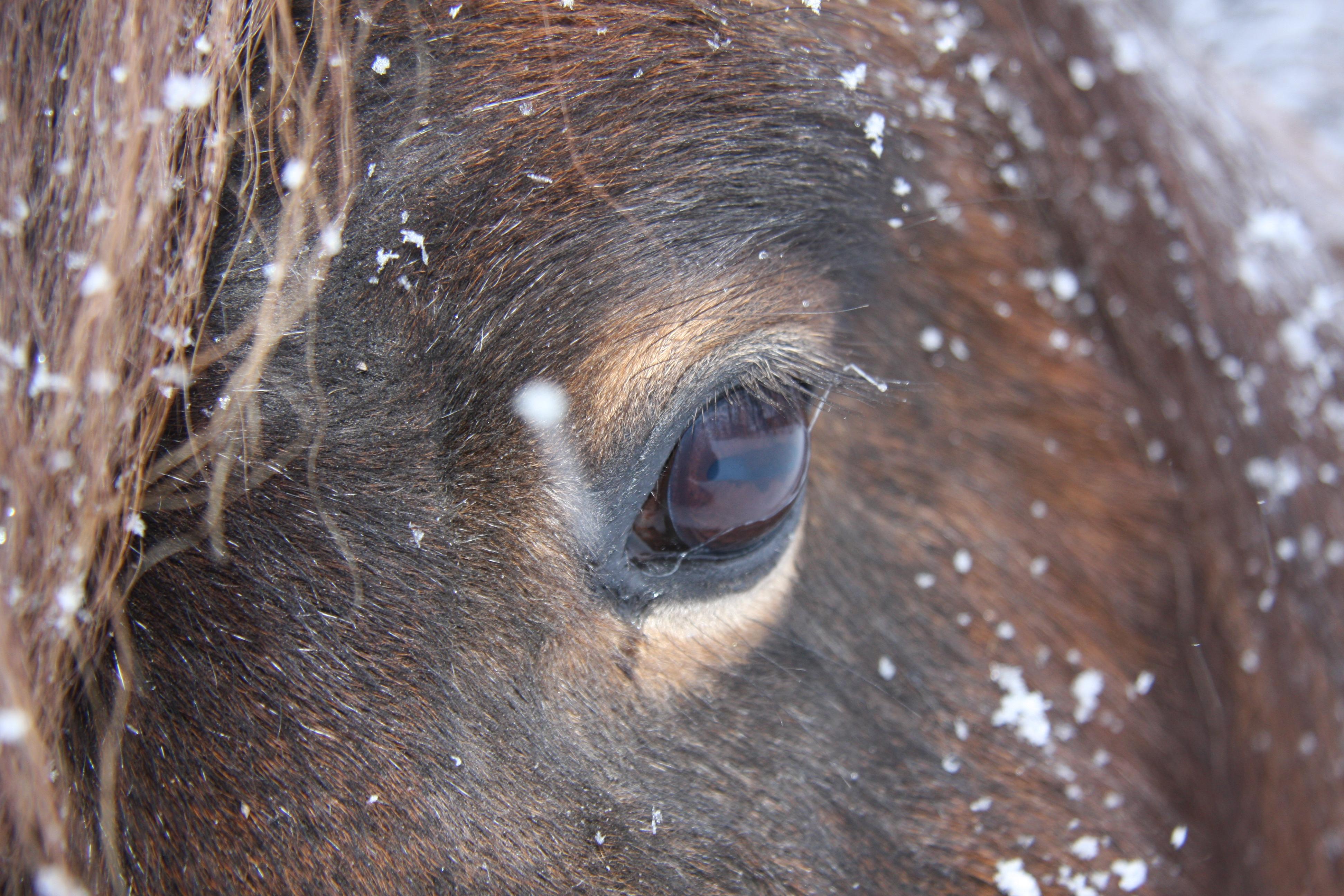 Jennys hästbilder jan -13 040