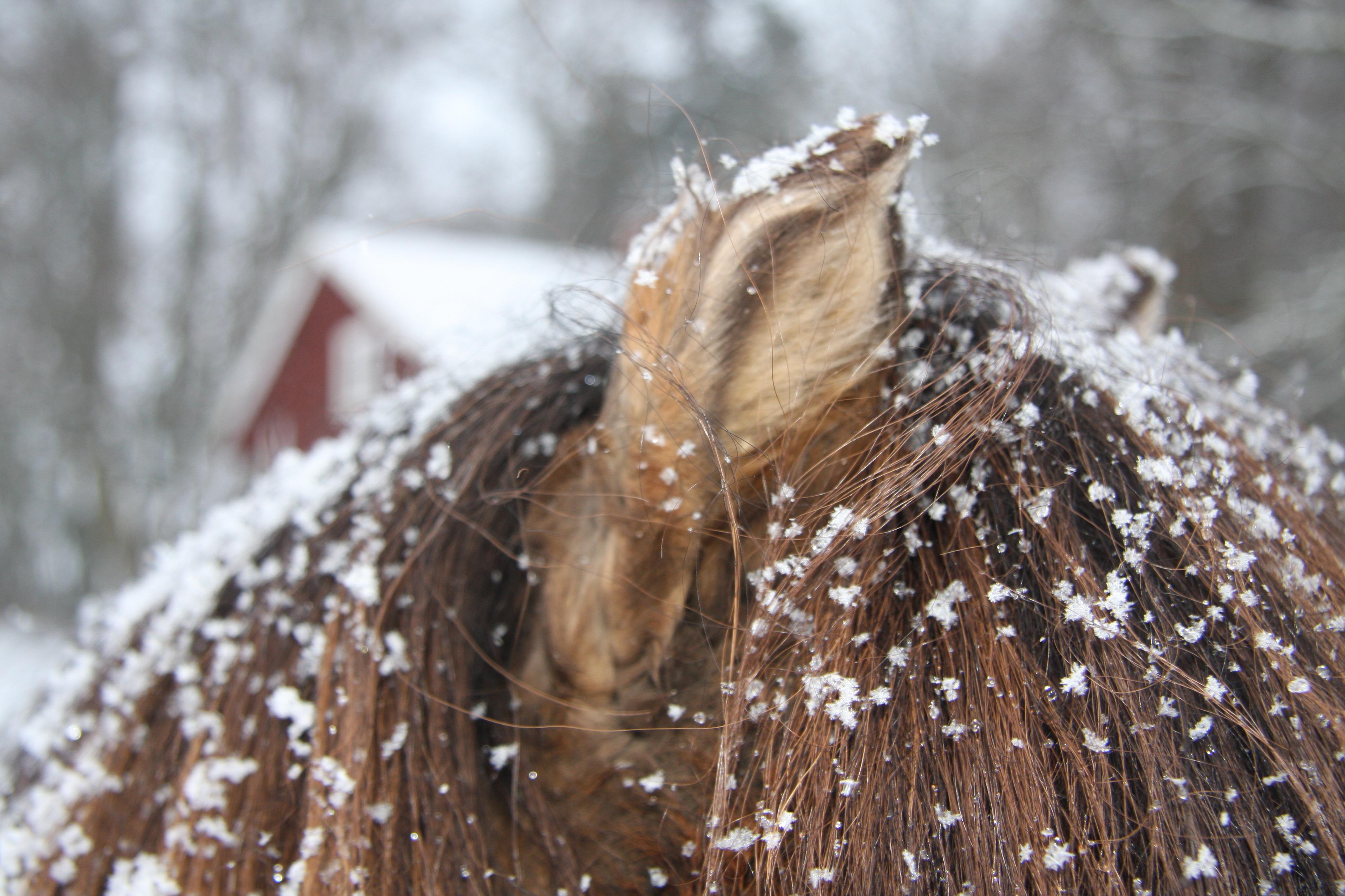 Jennys hästbilder jan -13 041