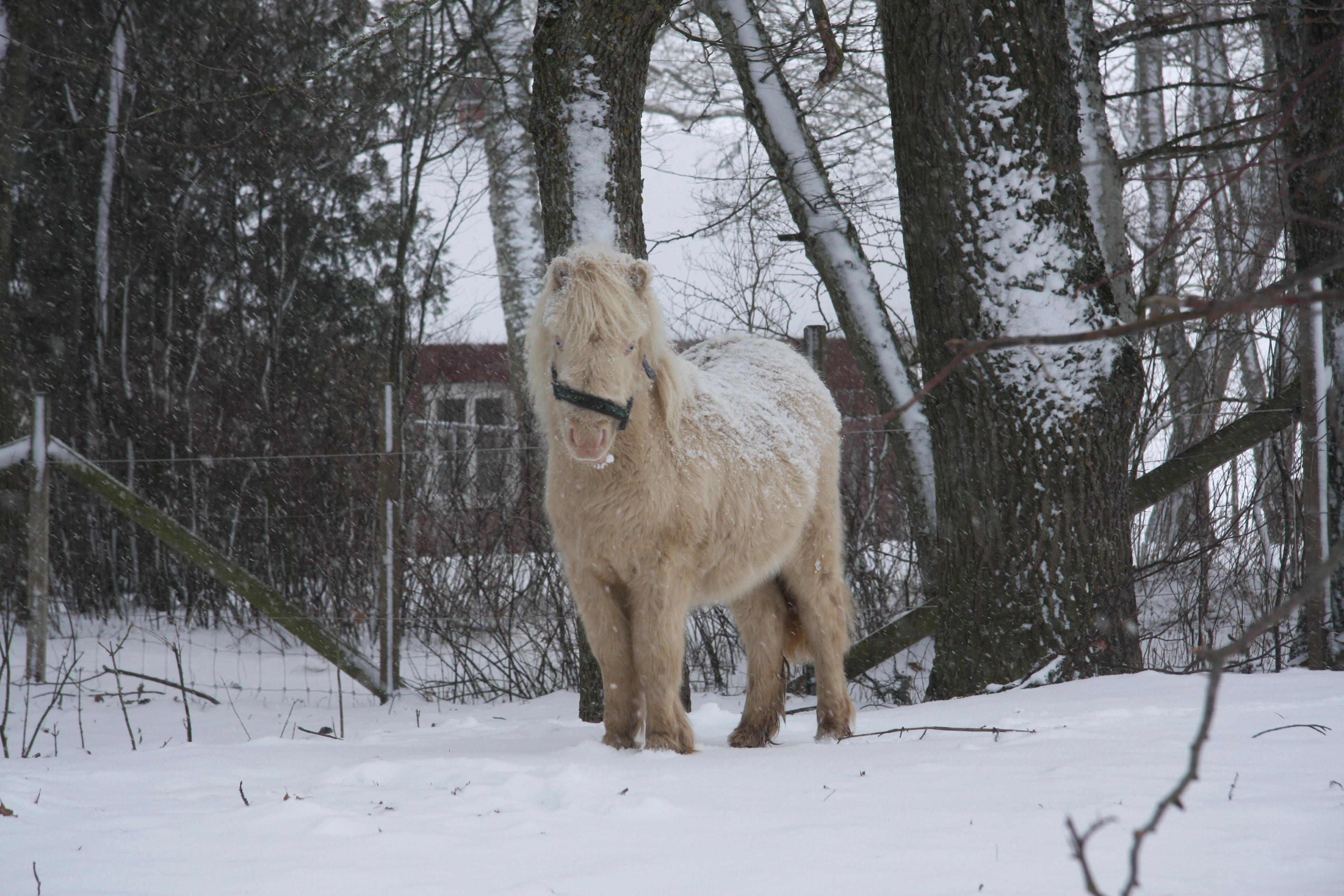 Jennys hästbilder jan -13 044
