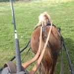Bästa körhästen - Dolly!