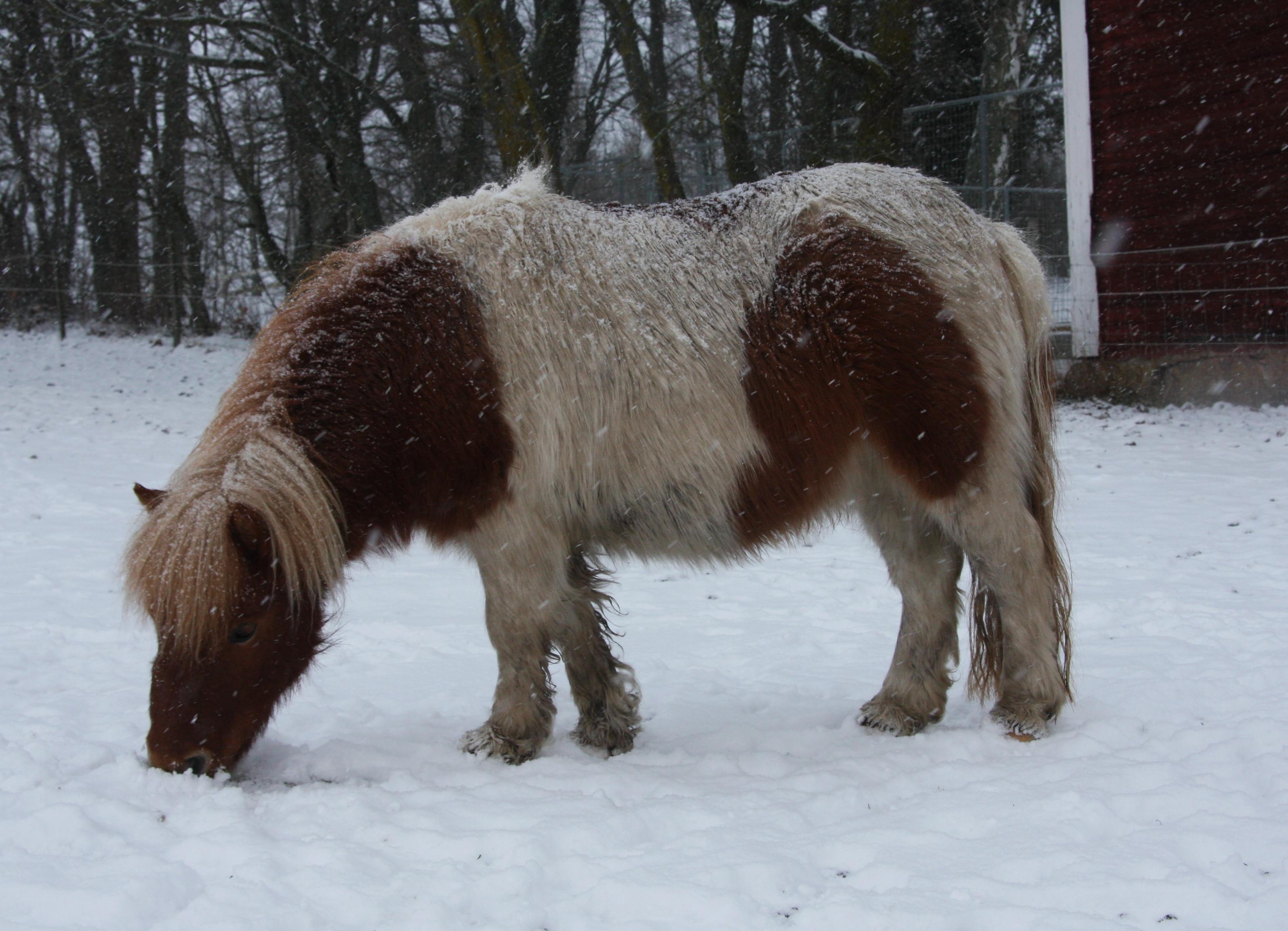 Jennys hästbilder jan -13 017